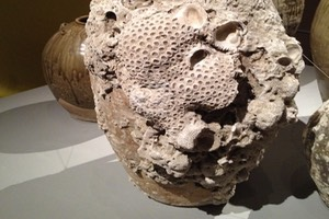 Urn recovered from seabed encrusted with shells, barnacles and sponges